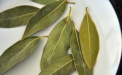 лечение гайморита отваром лавровых листьев - нетрадиционная медицина - здоровье - каталог статей - здоровый образ жизни