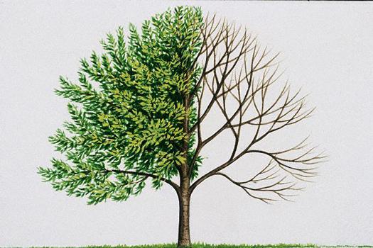 Загородный домик - омоложение, прореживание и укорачивание деревьев в саду