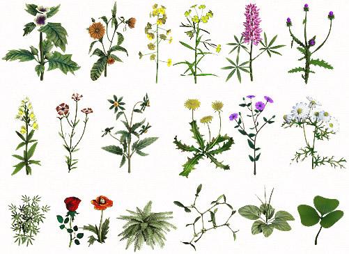 Народная медицина. лекарственные травы. лечение болезней травами