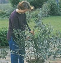 Обрезка примеры » все для дачников и огородников, советы и рекомендации